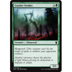 Conifer Strider