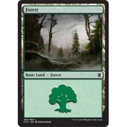 Forêt (268)