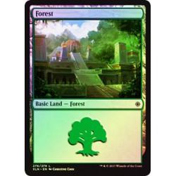 Forêt - Foil