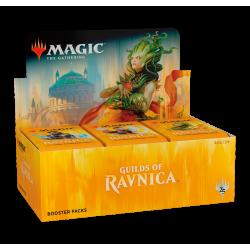 Box di Buste Gilde di Ravnica